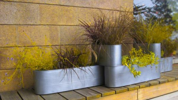 contemporary plants for planters