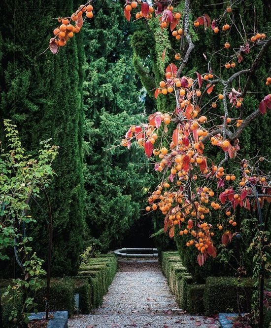 Italian Renaissance Backyard Garden