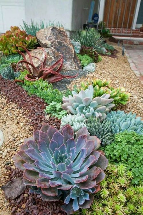 Xeriscape Backyard Garden Design