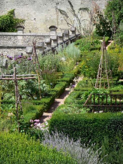 Backyard Garden Landscape with Herbs and Vegetables Plant