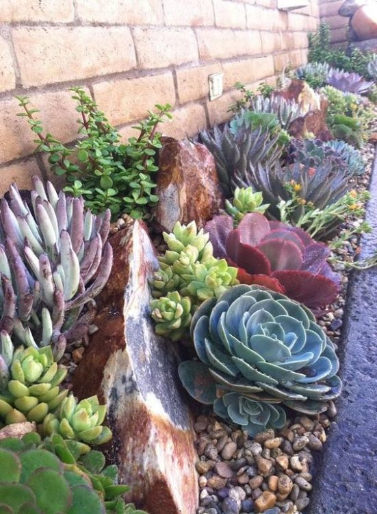 Beside Brick Wall Succulent Gardens