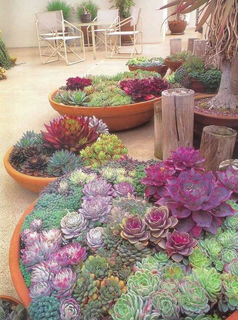 Bright Color Succulent Gardens