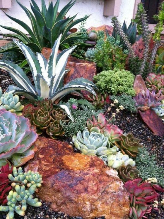 Classic Succulent Gardens