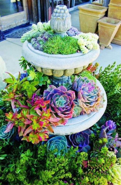 Classic Two Layer Succulent Gardens