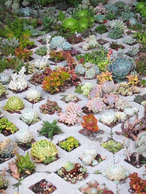 Geometric Square Hole Succulent Gardens