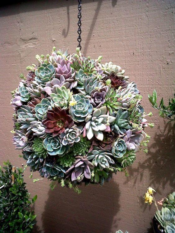 Hanging Globe Succulent Gardens