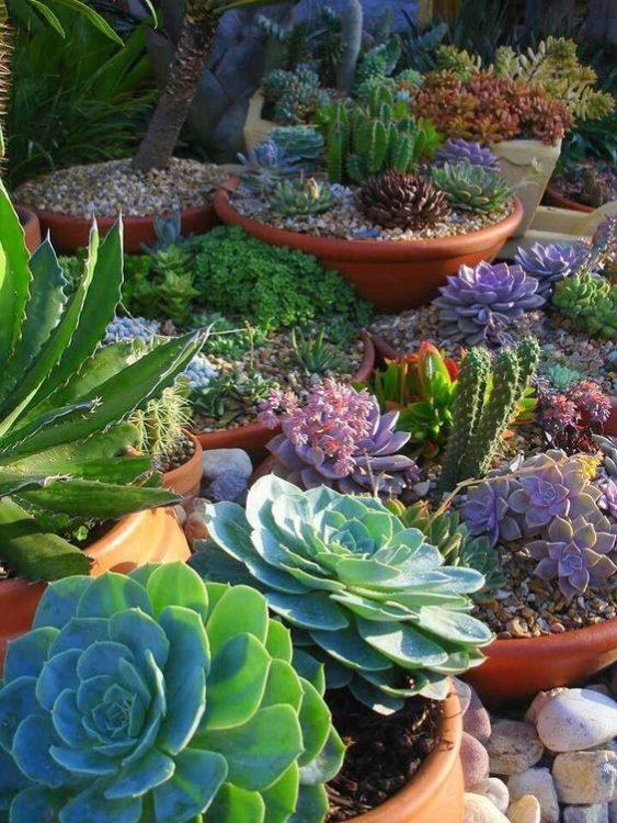 Landscape Potting Succulent Gardens