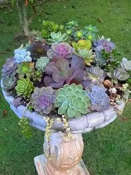Mid Century Succulent Gardens