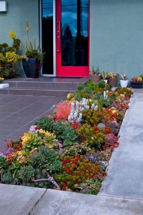 Minimalist Front Yard Succulent Gardens