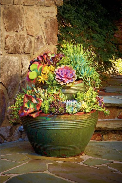 Minimalist Potting Succulent Gardens