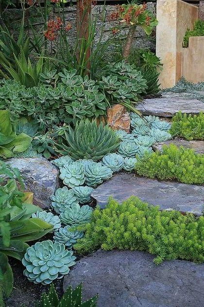 Pathway Succulent Gardens