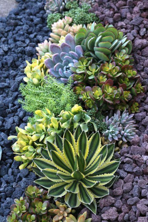 Simple Succulent Gardens