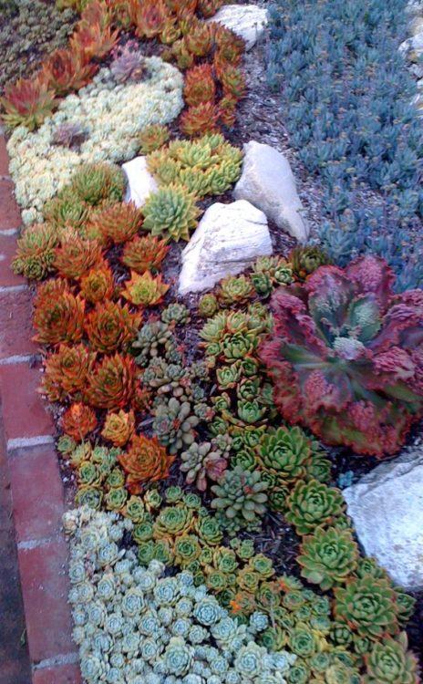 Small Landscape Succulent Gardens