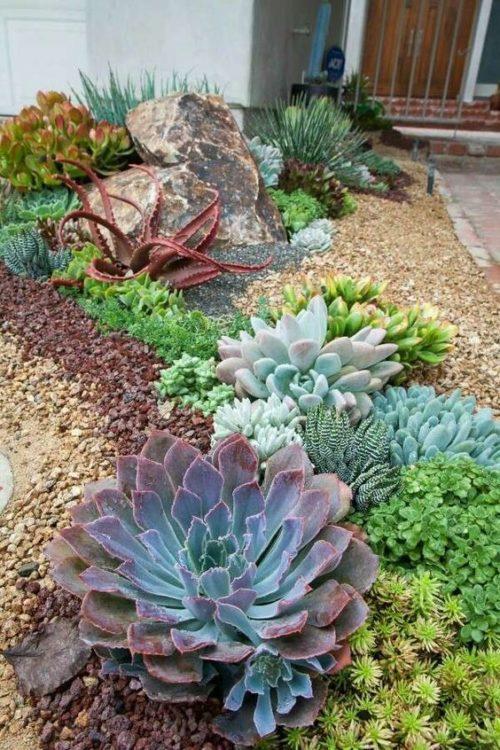 Sweet Succulent Gardens