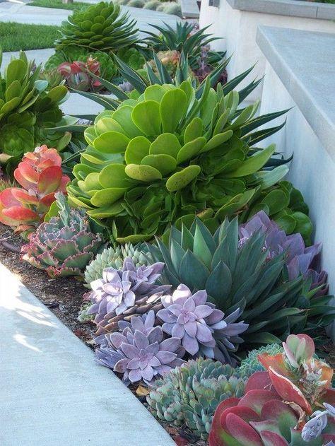 Terrace Succulent Gardens