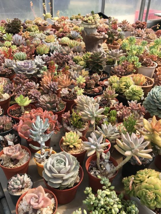 Tiny Potting Succulent Gardens