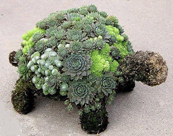 Turtle Succulent Gardens