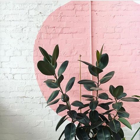 pink mural on white brick wall