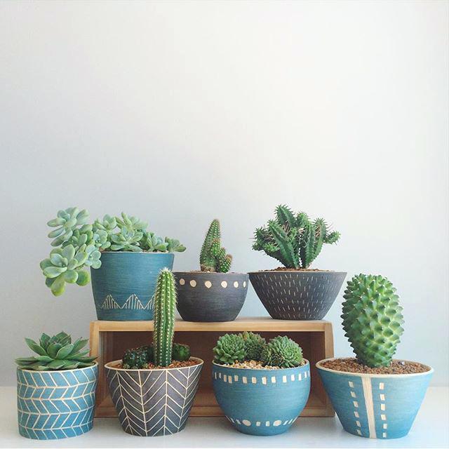 cactus planting pots cacti and succulents in beautiful pots large cactus plant pots cactus flower pot ideas 4