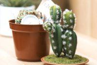 cactus pot safe growing ideas